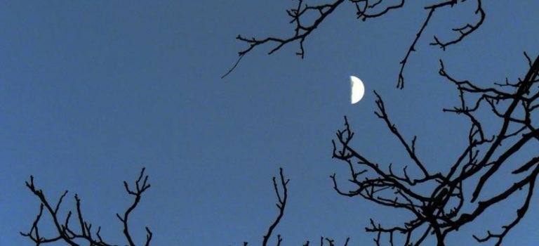 Les branches embrassent la lune
