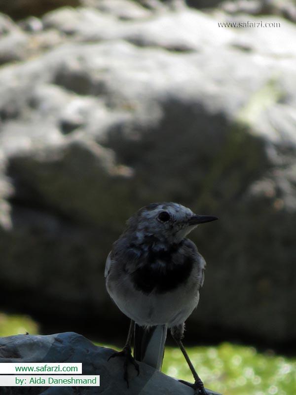 پرنده-شعر