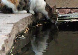 عکس گربه ای در آب