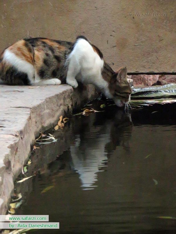 """در فرودست شاید """"گربه ای"""" می خورد آب"""