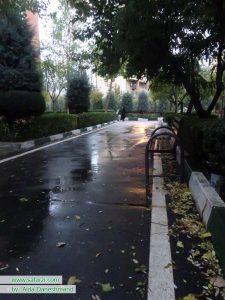 نیکتی در مسیری بارانی