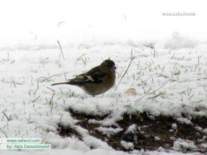 پرنده ای در برف