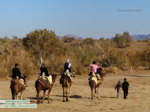 شتر سواری در حوالی کویر مصر