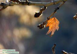 پاییز و برگ ریزان