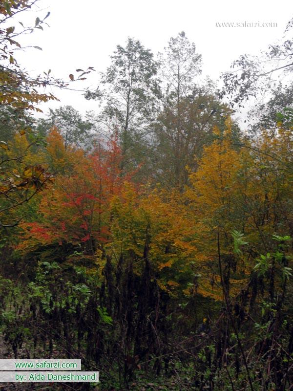 جلوه ای از پاییز
