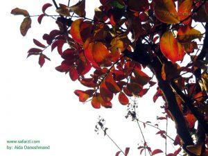 زیبایی پاییزی بلوار کشاورز