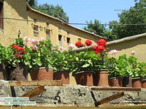 گل های شمعدانی روستای تاریخی ماسوله