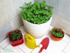 گلدان مناسب برای کاشت ریحان
