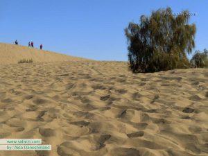 تاغ زیبایی در کویر مصر-ایران
