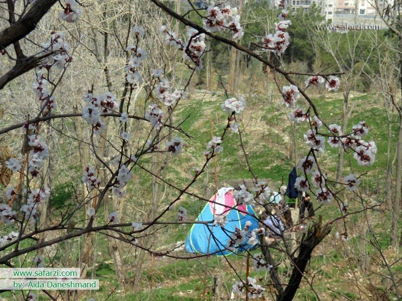 تصاویری از شکوفه های بهاری تهران